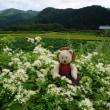[美山かやぶきの里」へ。懐かしい日本の原風景に出会える山里