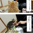 今日の3猫と、こーちゃんと近況。