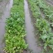 雨の庭・畑