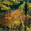 斜光からの木々の間からの色彩