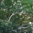 バナナワニ園 その2