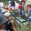 霞川水辺の生き物調査体験教室(報告)