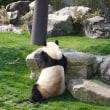 アドベンチャーワールドでパンダ三昧!