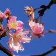 今朝の霧の舞う風景と雫の光る四季桜