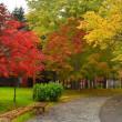 「芸術の森の秋」