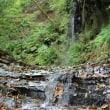 粟又の滝自然遊歩道から