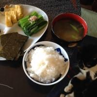 たまご焼きと海苔と小松菜