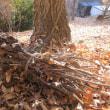 裏山の落ち葉掃き