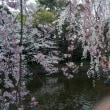 東海道だらだら歩き11 2日目 三島宿