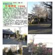 花巡り 「桜-その441」 平塚神社 平塚城跡