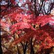 秋の森林公園