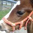子馬はかわいい