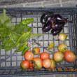 今日の収穫 トマト ナス トウガラシ類 青シソ うまい菜 シロウリ