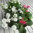 今日入荷❗花植物😊リメイク花寄せ植え、ブラック基調の鉢再撮影
