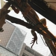 ひな祭りと爬虫類カフェ
