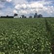 米国ミシガン州大豆生育状況