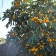 柿の降る里