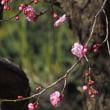 平尾台自然の郷フォトクラブ華蓮2月講座