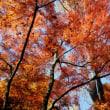 紅葉狩り公園散策