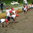 宮野森小学校で田植体験の校外学習が開催されました。