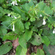 白い花は何かしら:代々木公園