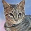 知人の愛猫