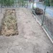 畑土作り・4