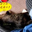 【動画】モモちゃん(12歳♂)のワクチン注射&深まる秋に~♪