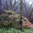 森の中へ 2