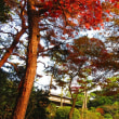 『明治の色』 日本庭園