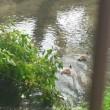 玉川上水に行ってきました。