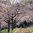 平成30年3月17日(土) 赤城自然園で花見♪
