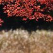 香嵐渓の一番輝く時