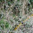 雀の生る木