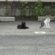 17年8月19日猫の軍団