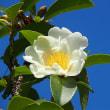 「白秋」・・白い花