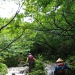 未明まで降った雨で増水と濁りの U川(2017.7.29)