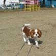 芝犬の子犬?