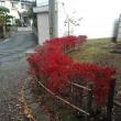 四季2017(10) 紅葉・黄葉が織りなす様が美しい(2)