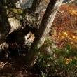南本内岳(「夫婦水楢」、10/16)