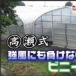 8/20  §高瀬式14回転ハウス・農業用ビニールハウス§ 熱戦続く