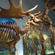 恐竜博物館ふたたび