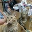 猫ちゃんたちのバトル♪