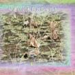 『 枯蓮わが老骨も花咲かす 』物真似575冬zrm1305