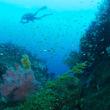 サンゴとダイバー