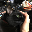 黒猫に捕獲される