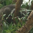 いつの間にか夏至も過ぎ緑濃き多摩動物公園