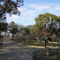 奈良公園の梅園