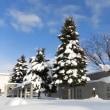旭川・「大寒」の日は氷点下11.2度だったヨ
