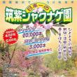 植栽始めて50 有余念日本一の筑紫シャクナゲ園